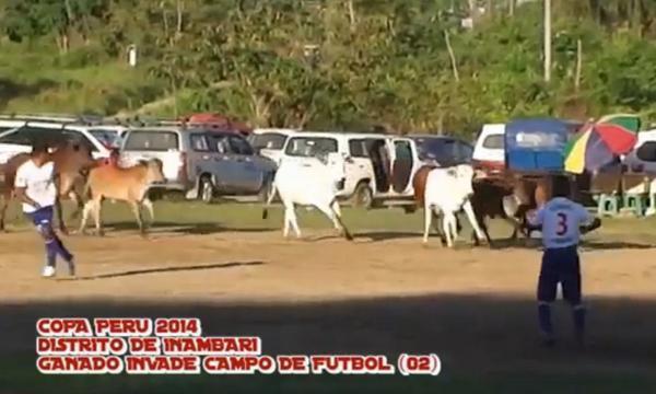Nuevas postales de la copa per la red for Vacas decorativas para jardin
